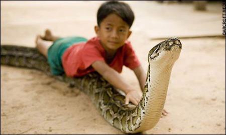 柬埔寨男孩与雌性巨蟒同住同睡6年