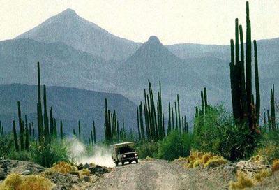 墨西哥 蛇 鹰和仙人掌的国度图片