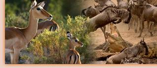 跟着阿斯兰探险之旅一起去东非看动物吧