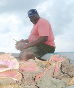 特克斯和凯科斯群岛旅游局 加勒比