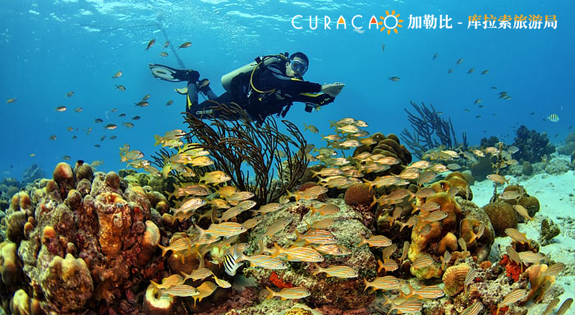 Curacao: the best dive destination recommended by Scuba Diving Magazine and Forbes Magazine