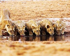 Hidden Valley Safaris