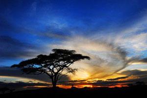 坦桑尼亚美景