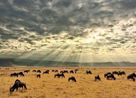探寻恩戈罗恩戈罗自然保护区的历史