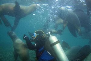 阿根廷海底探险