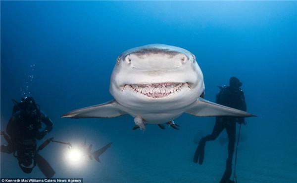 美男子拍摄鲨鱼露齿大笑瞬间