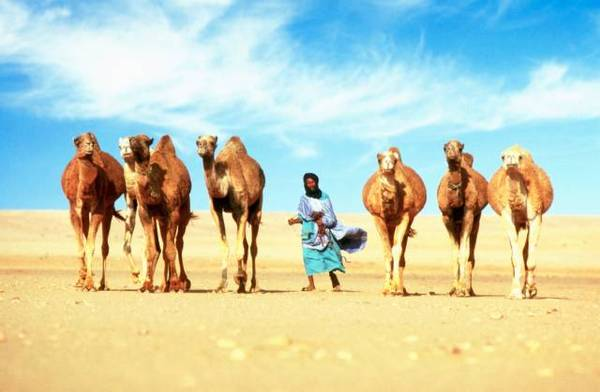 非洲撒哈拉沙漠-世界上最多日照的地方