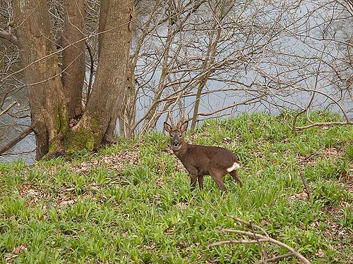 在阿伯丁海边跑步时经常看到小兔子