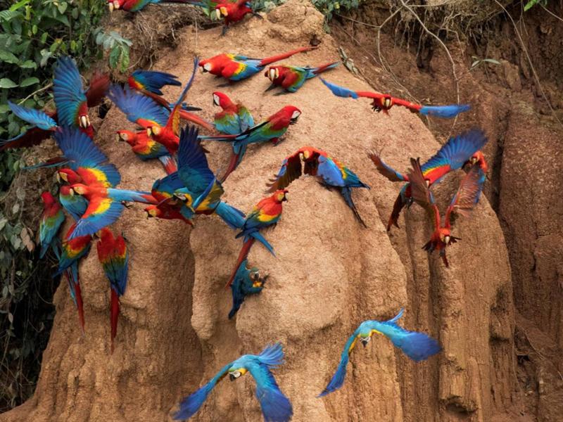 秘鲁坦博帕塔区