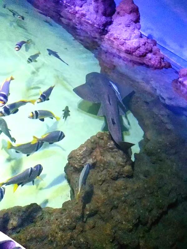 沙迦水族馆