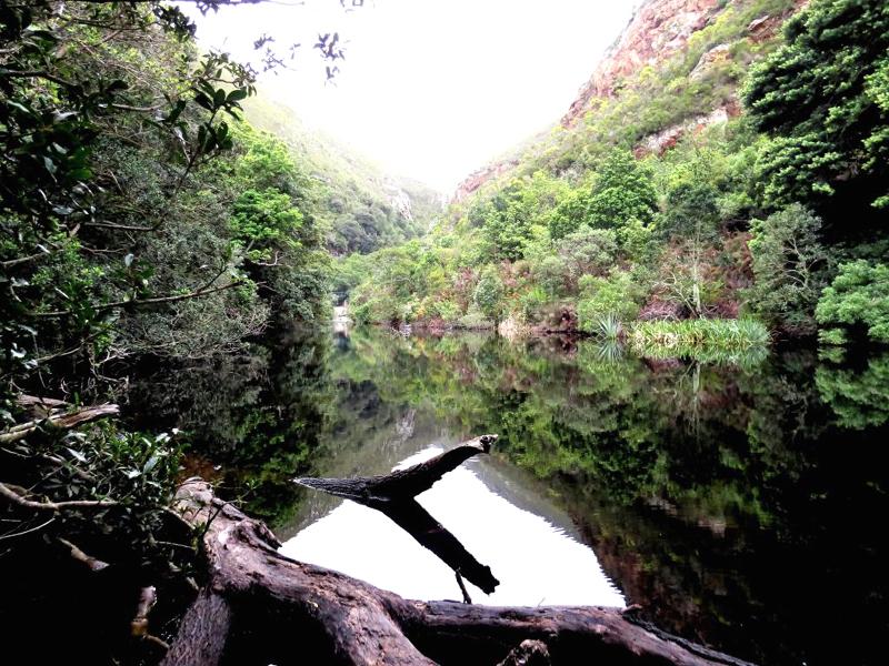 南非齐齐卡马国家公园