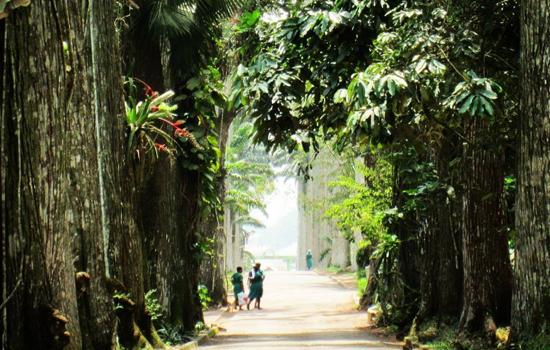阿布里植物园