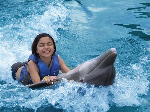 牙买加海豚湾