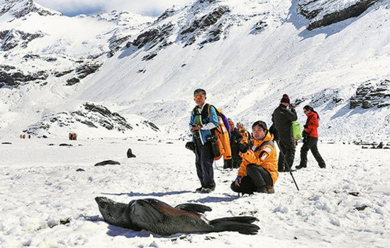 Chinese tourists take pictures of seals in Antarctica in January, 2017-2