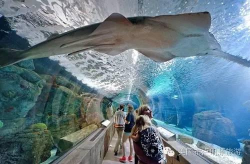 明尼苏达水族馆
