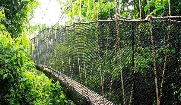 卡库姆国家公园吊桥