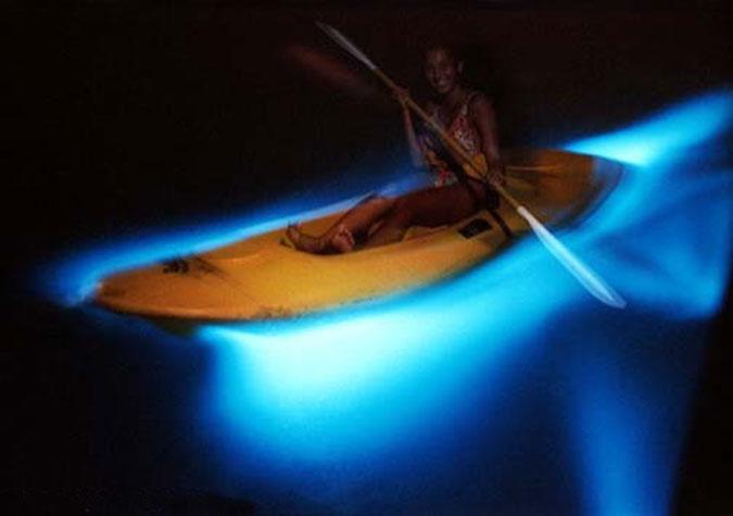 牙买加蒙特哥贝发光泻湖