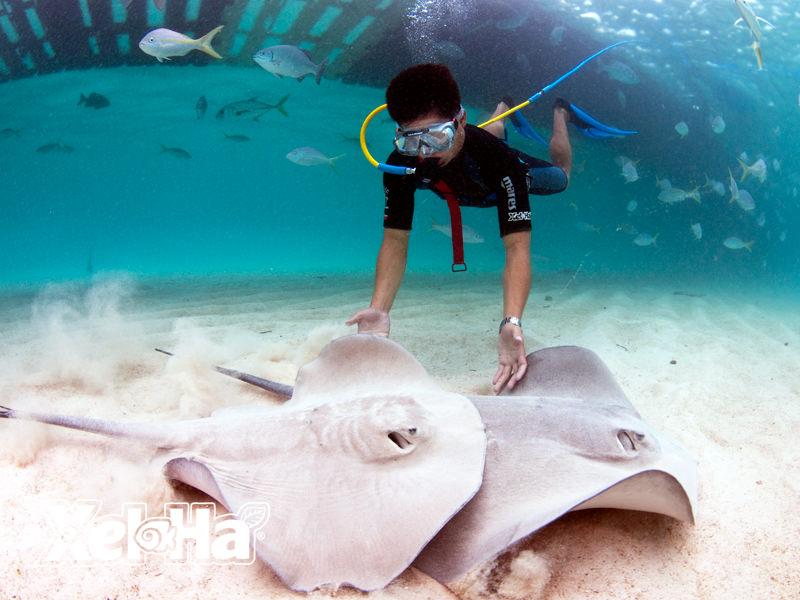 墨西哥谢哈海湾潜水