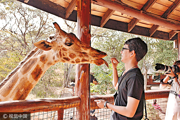 feeds a giraffe
