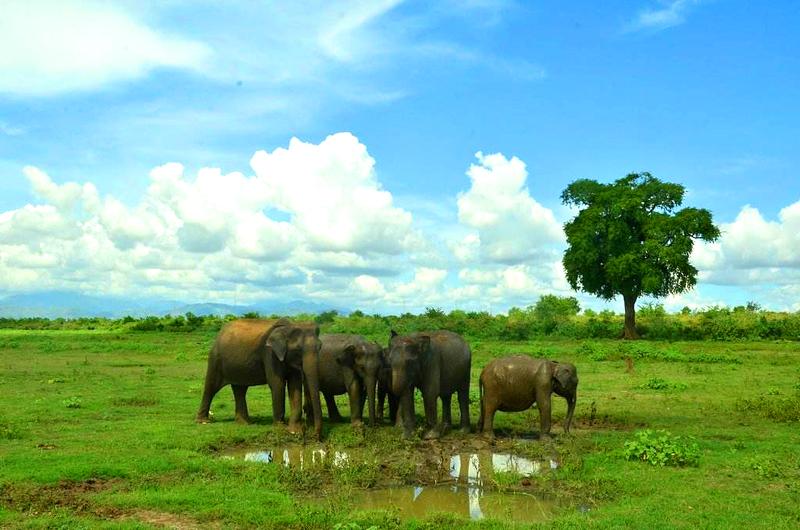斯里兰卡乌达瓦拉维国家公园