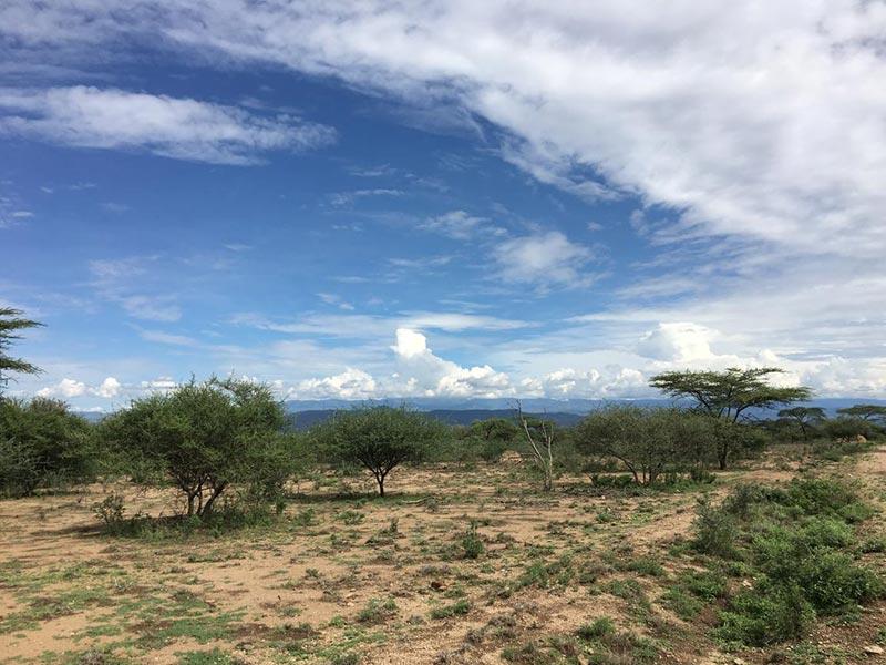 埃塞俄比亚阿瓦什国家公园