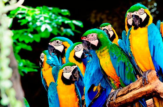 秘鲁亚马逊
