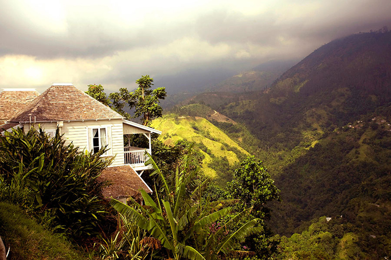牙买加蓝山草莓山庄