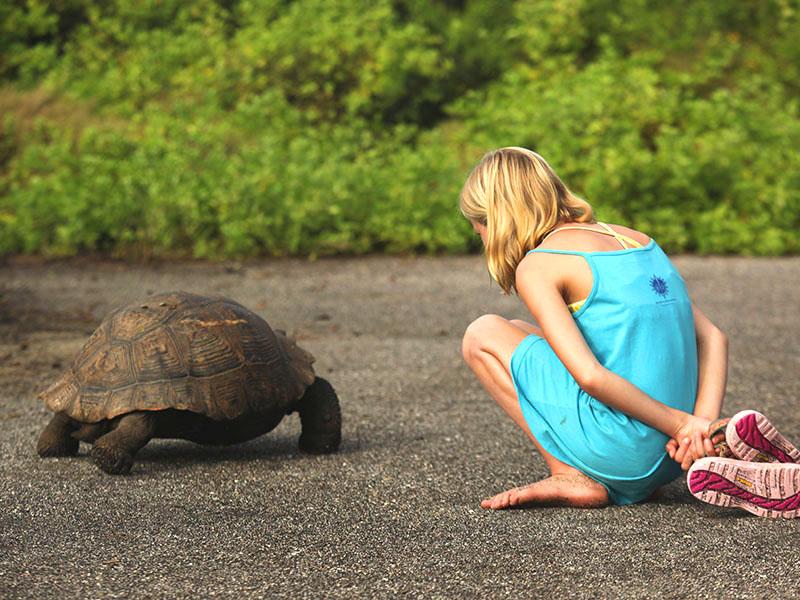 厄瓜多尔加拉帕格斯群岛巨龟之岛