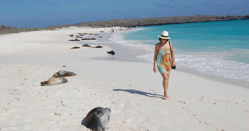 厄瓜多尔加拉帕格斯群岛海豹