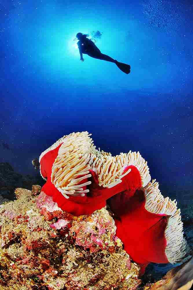 法属留尼汪岛莱米塔日海底小径