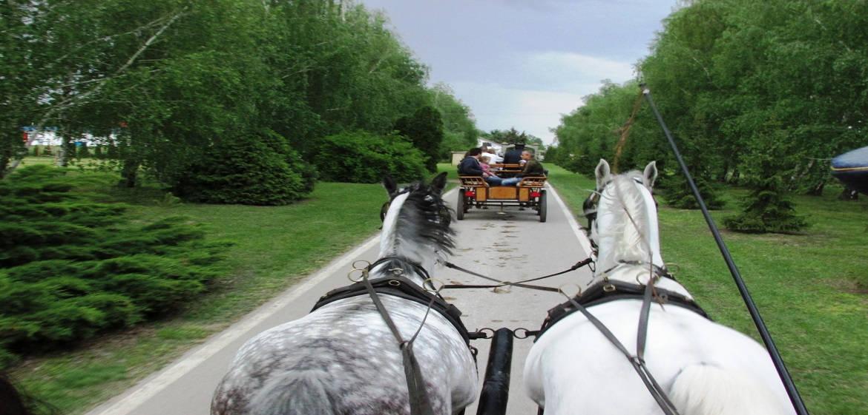 塞尔维亚Kelebija马场