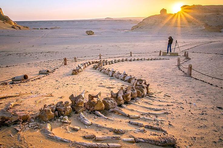 埃及鲸鱼谷