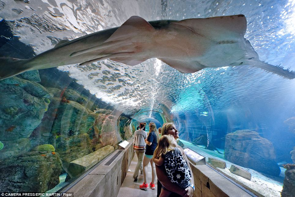 明尼苏达海洋馆