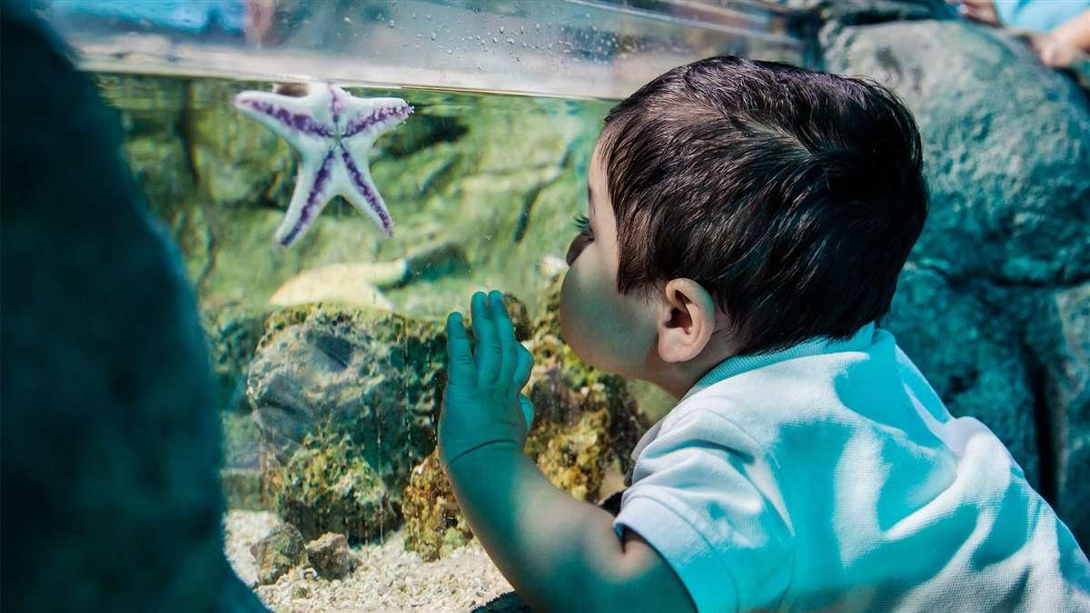 海洋生物水族馆