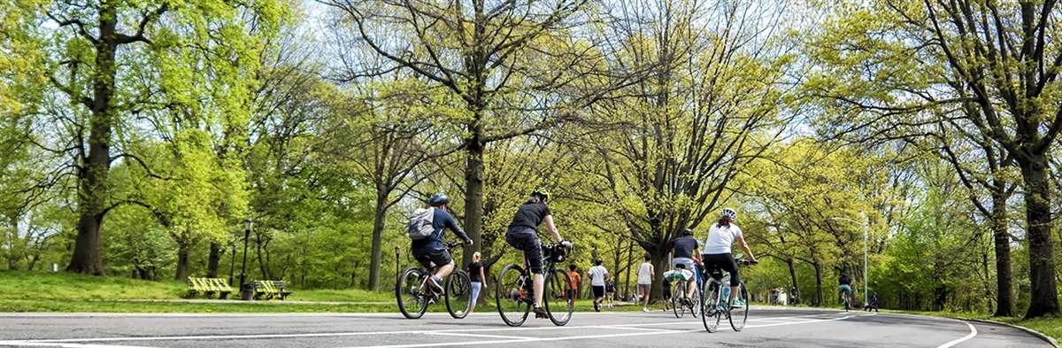 中央公园(Central Park)观光自行车游览与租赁