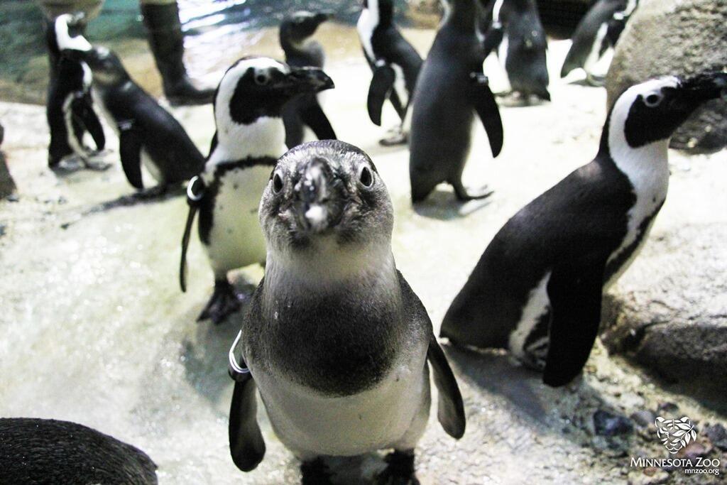 明尼苏达动物园
