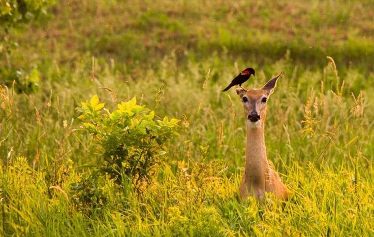 明尼苏达谷国家野生动物保护区