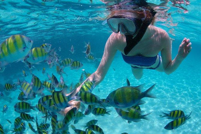 加勒比牙买加蒙特哥贝海洋公园