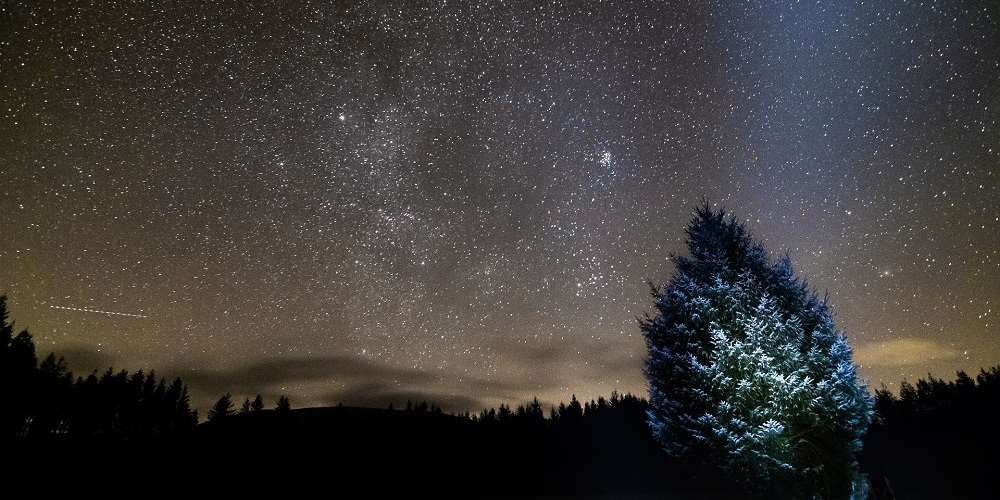 英国苏格兰加洛韦森林公园