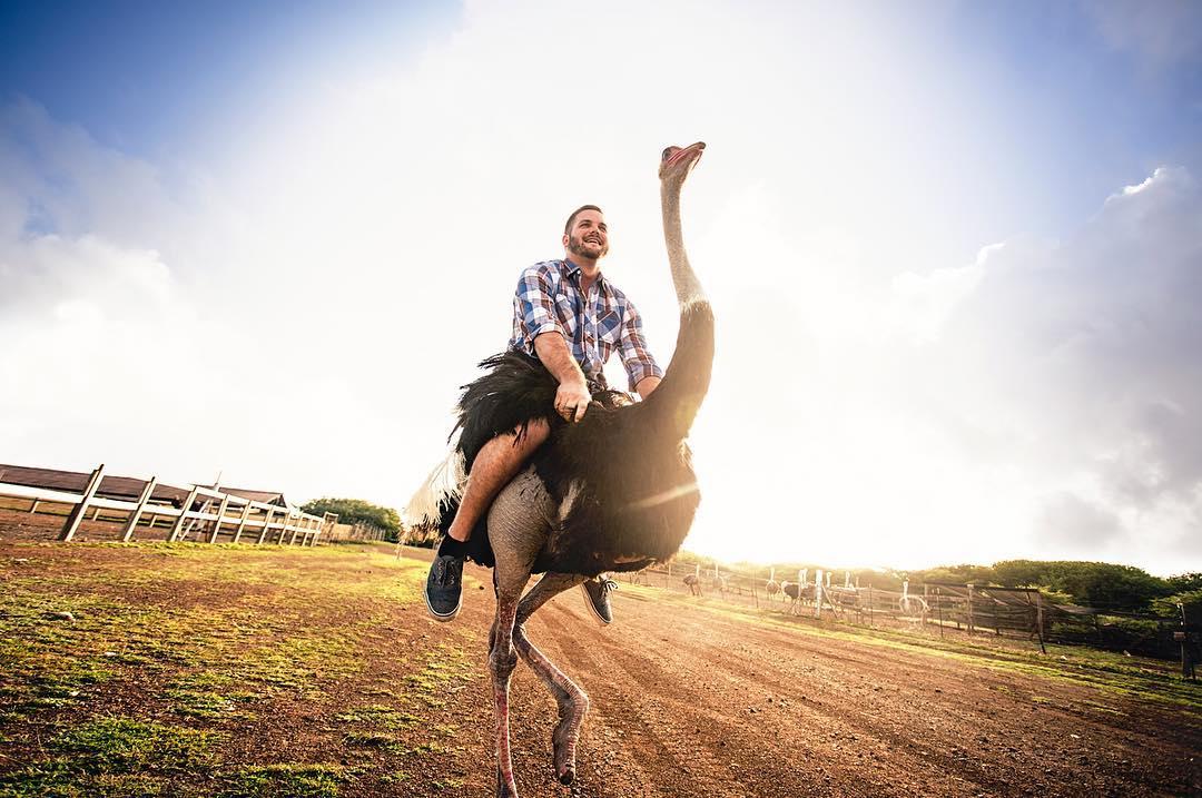 加勒比库拉索鸵鸟农场骑鸵鸟