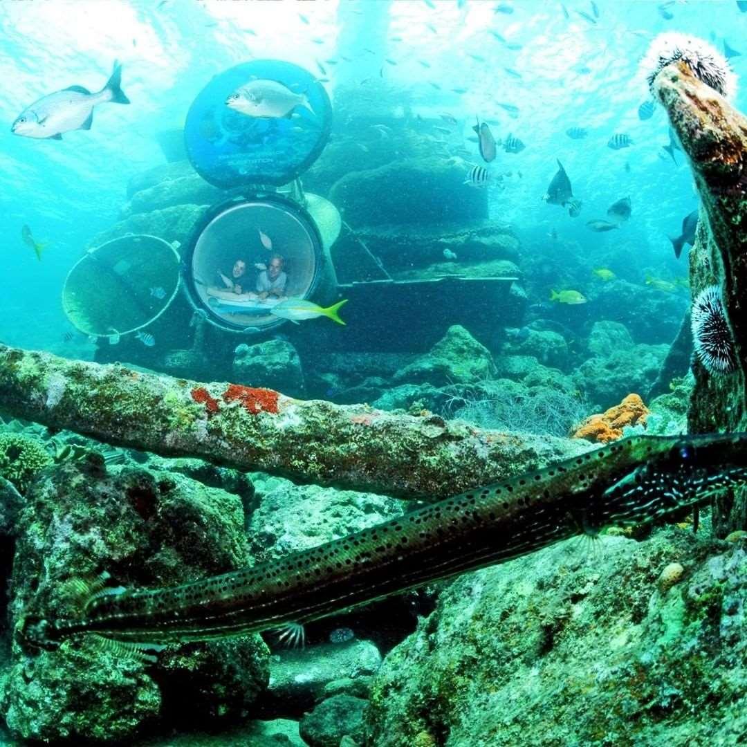 加勒比库拉索海洋水族馆