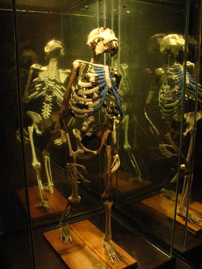 埃塞俄比亚国家博物馆露西化石