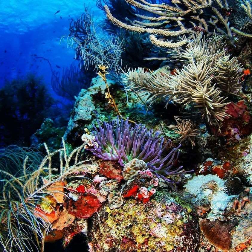 加勒比海库拉索岛潜水珊瑚礁