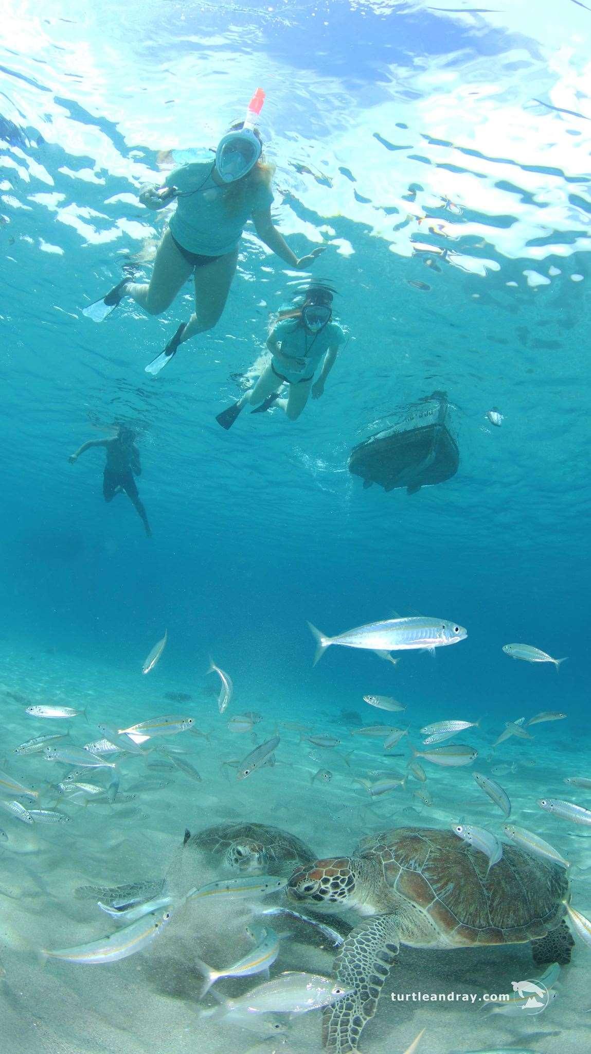 加勒比海库拉索岛浮潜