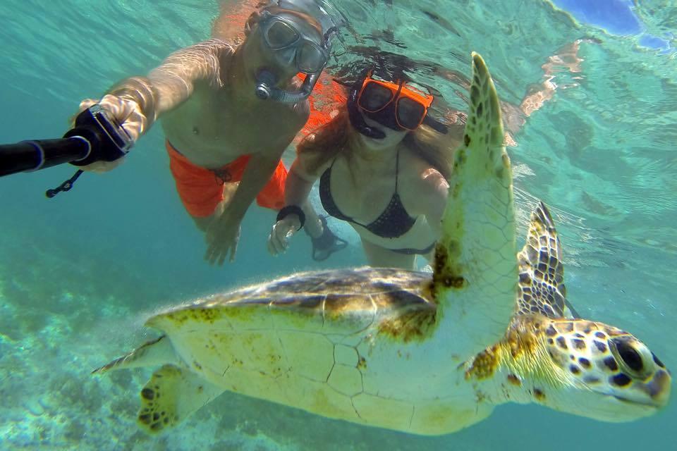 加勒比海小库拉索岛浮潜