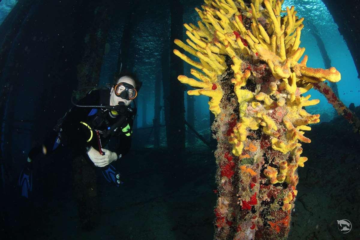 加勒比海库拉索岛潜水珊瑚
