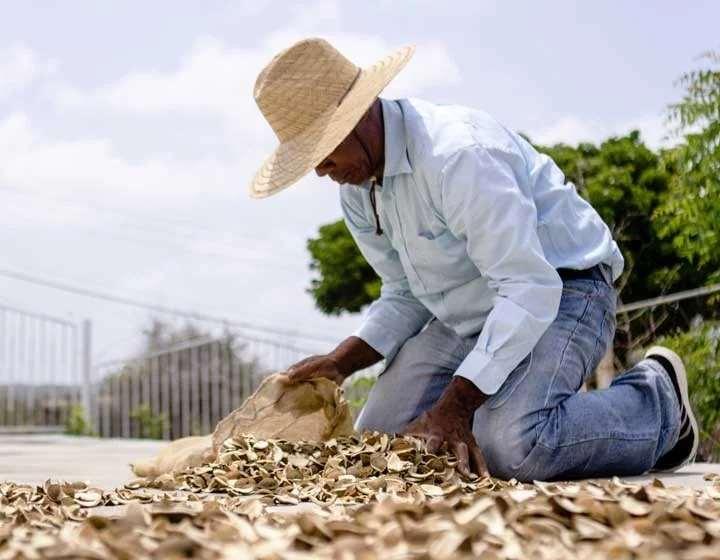 加勒比海库拉索岛苦橙皮